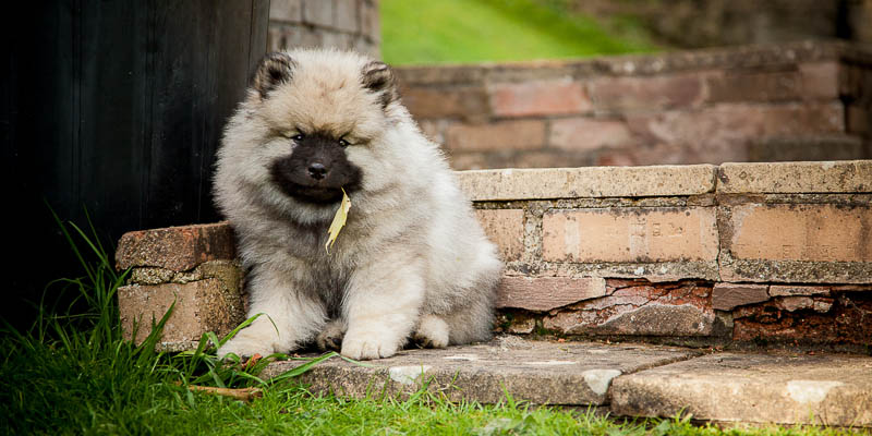 Pet & Dog Photography