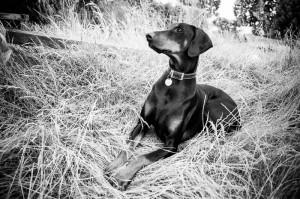 Pet Dog Photography