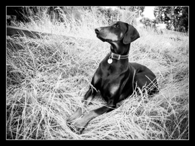 Gloucester pet photographer