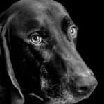 gloucestershire dog photography
