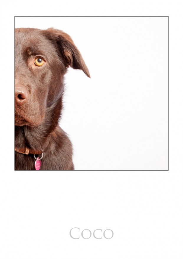 Pet Photography Bristol
