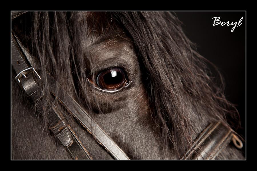 Beryl  the pony