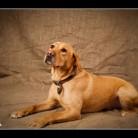 Dog Photography Brewster